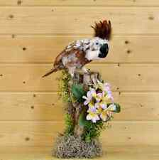 Cockatoo Reproduction Taxidermy Mount - Sw5801