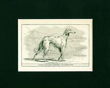Dog Art Print 1900 Saluki Dog Afghan Greyhound ANTIQUE