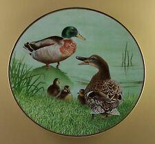 The Waterbird Plates Plate Mallard Eric Tenney Danbury