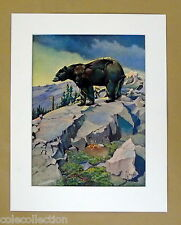 "Vintage Wildlife Art Print THE BLACK BEAR by Artist F L Jaques, Matted 11""x14"""