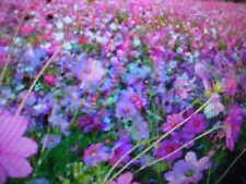 100% LOW GROUND COVER WILD FLOWER SEED 20-VARIETY SEED MIXTURE Buy-1-Get-1-FREE