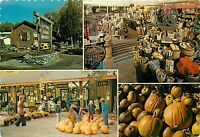 Suttons Farm Market Country Store Glens Falls NY New York Postcard