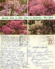 USA - Spring Time is Lilac time in Rochester, New York (S-L XX307)