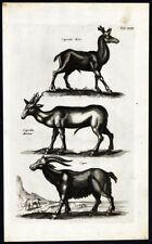 Antique Print-Roe Deer-Goat-Capra-Capreolus -Mammals-Jonston-Merian-16 57