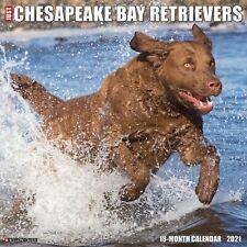 New ListingJust Chesapeake Bay Retrievers (dog breed cal) 2021 Wall Calendar (Free Ship)