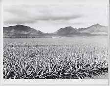 """DOLE PINEAPPLE FIELD HELEMANO 1981 HAND PRINTED SILVER HALIDE FOTO ON 8X10"""" MAT"""