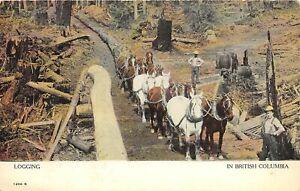 H46/ British Columbia Canada Postcard c1910 Logging Loggers Horses