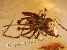 Bernstein Inkluse Inklusen Einschluss Insekt, Spinnenmännchen (Aranea) IN116