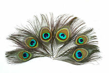 50 peacock eye feathers, cut to 4.5 inches