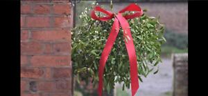 Mistletoe, extra large globe or 6 kilo'spicked fresh to order