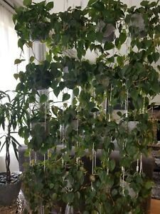 Adjustable Plant Hanger, Wall Planter, Room Divider, Plants Display, Shelves.
