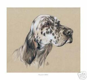 English Setter, Open Edition Sketch Print
