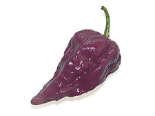 25 Quality Seeds - PURPLE BHUT JOLOKIA / Naga Jolokia Ghost Chilli