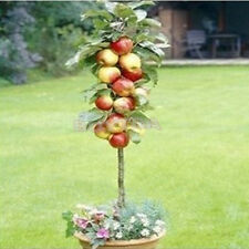 Novelty Magic Pop 20pcs Per Bag Bonsai Apple Tree Seeds Fruit Garden Plants EFUS