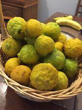 25 Kaffir Lime Seeds***fresh