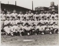 Rare 1930's Pinstripes 1932 Chicago Cubs TEAM PICTURE 8x10 HQ Print MINT Wrigley