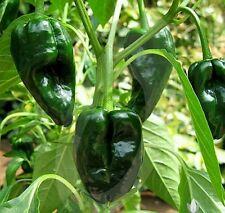New listing Organic Fresh 2017 Ancho Poblano Pepper 30 seeds Plus
