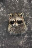 Raccoon Shoulder mount taxidermy for sale SKU 1786