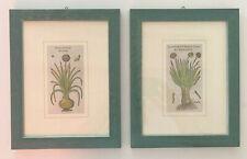 MATTIOLI coppia di quadretti con n.2 Xilografie 1500 Botanica Erbario Piante