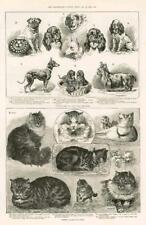 1886 - Antique Print LONDON Crystal Palace Cat Show Toy Dog Show Aquarium (145)