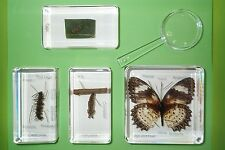 Leopard Lacewing Butterfly Life Cycle Set with labels in 4 Blocks Learning Aid