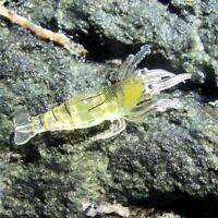 10 Pcs Leurre de peche artificiel Appats mous a la crevette bionique Attira U1C7
