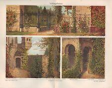 Chromo-Lithografie 1907: SCHLINGPFLANZEN. Araceen Kletterpflanzen Biotop Pflanze