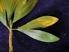 Vintage Millinery Flower Green Leaf Lot of12 Split Lobe Hat Wedding or Hair Bd