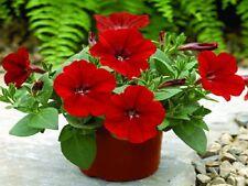 25 Pelleted Petunia Seeds Ramblin Red Trailing Petunia