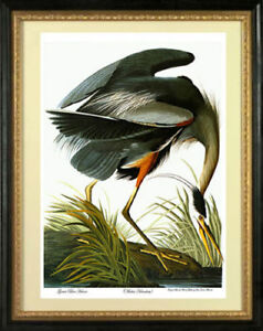 Audubon Great Blue Heron 30x44 Audubon Fine Art Print Hand Numbered Edition