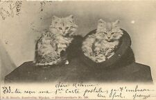 CARTE POSTALE POST CARD FANTAISIE ANIMAUX CHAT CAT