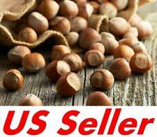 5~20 Seeds American Hazelnut Tree T87, Filbert Corylus Americana Fruit Nuts