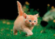 KITTEN on a Mission 3D Lenticular Postcard -