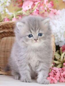 "KITTY'S NOTE CARDS - Set of 12 + Envelopes - ""Kittens Variety Pack 3"""