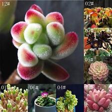 60pcs / Bolsa raza suculentas semillas de cactus Lithops raras piedras vivas RU