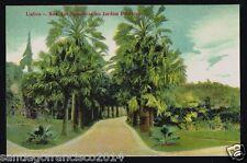 PORTUGAL 19.-LISBOA -1117 Rua das Palmeiras no Jardim Botanico (Ediçāo Costa)