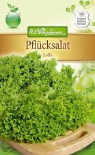 Pflücksalat 'Lollo Bionda' - Lactuca sativa, Salat, Schnittsalat, Samen 4218