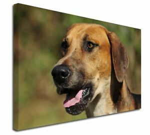 "Foxhound Dog X-Large 30""x20"" Canvas Wall Art Print, AD-FH1-C3020"