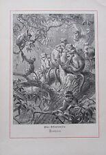 1879 Joseph Wolf EINE AFFENFAMILIE - MEERKATZEN antiker Druck old print