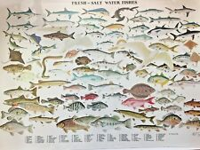"""vintage fresh and saltwater fishes poster 25x38"""" nautical decor"""