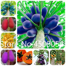 10 Pcs Seeds Papaya Bonsai Fruit Vegetable Dwarf Tree Plants Jardin Garden 2019