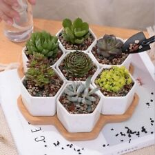 Seven White Hexagon Ceramic Pots With Wooden Tray Cactus Succulent