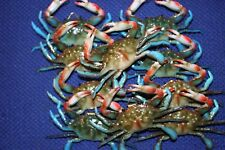 (10) Realistic Blue Crab Replicas 3 3/4 inch, Crab Shack Crab Display