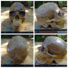 "Huge 5.0"" Cobra Elephant Jasper Skull 2.8bs 1255g Crystal Healing Massive Big"