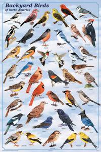 Backyard Birds of North America Educational Chart Poster 24 x 36 FREE SHIPPING