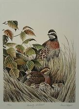 Family Retreat, Quail Covey, Dave Chapple, S/N Etching Print, Hand Tinted