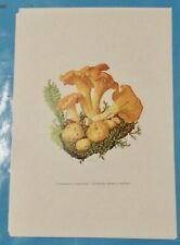 Planche poster Affiche art print Botanique Champignon Chanterelle girolle jaune
