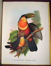 1948 First Edition Tropical Birds Batsford Colour Books 16 John Gould Plates
