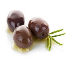 Kalamata Calamata Greek Greece Olea Europaea Olive Seeds 5 PCS RARE VARIETY!