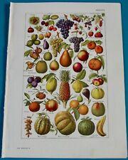 Ancienne Impression Fruits Raisin Poire Abricots Fraise Cerise Grenade Kakis